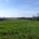 35+ ACRES IN SOUTHEASTERN LINCOLN COUNTY TO BE SOLD IN 2 TRACTS – REAL ESTATE TO BE SOLD SATURDAY, JUNE 3, 2017, Beginning 11:00 A.M. LOCATION: Pieper Road, Winfield, Missouri […]